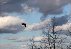 Wolkenbilder: ...der Weg