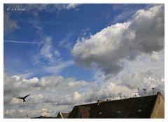 Wolkenbilder: Himmel vorm Balkon, mit Mauerseglern...