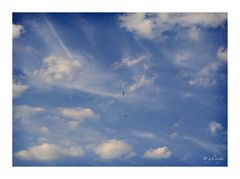 Wolkenbilder: Vielfalt mit Mauerseglern