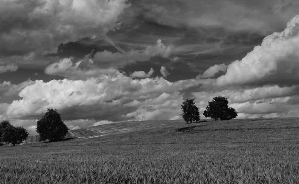 Wolkenfeld