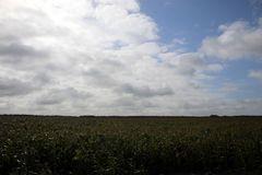 Wolkenformation über dem Maisfeld