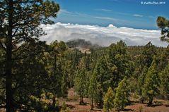 Wolkengrenze über den Kiefernwäldern