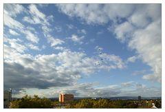 Wolkenhimmel mit Zugvögel