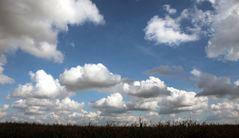 Wolkeninvasion überm Maisfeld
