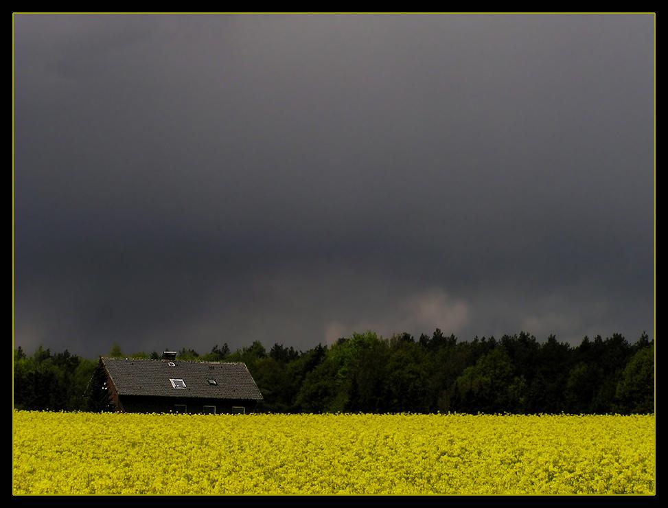 Wolkenstimmung über dem Rapsfeld