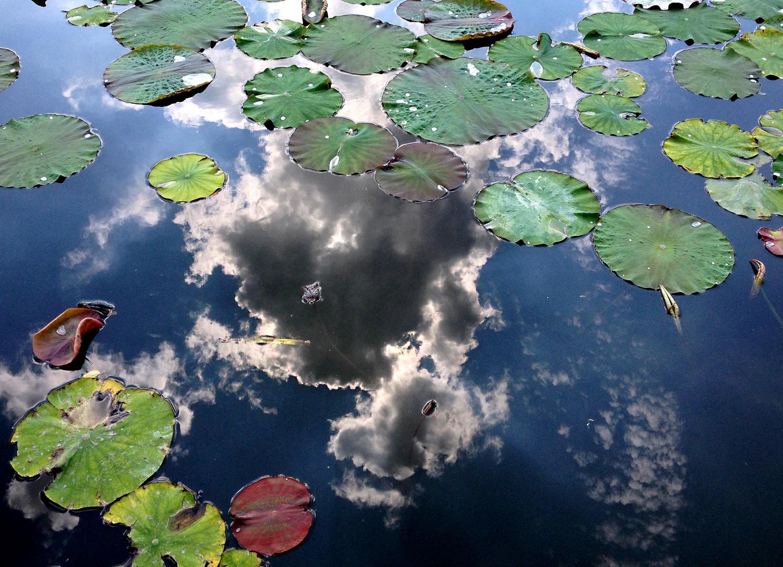 Wolken...zwischen wachsenden Lotusblumen-Pflanzen