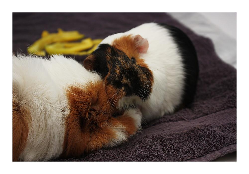 wollen wir eine runde kuscheln foto bild tiere haustiere nagetiere kaninchen bilder auf. Black Bedroom Furniture Sets. Home Design Ideas