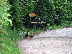 Wollen wir uns hier auf die Bank setzen?