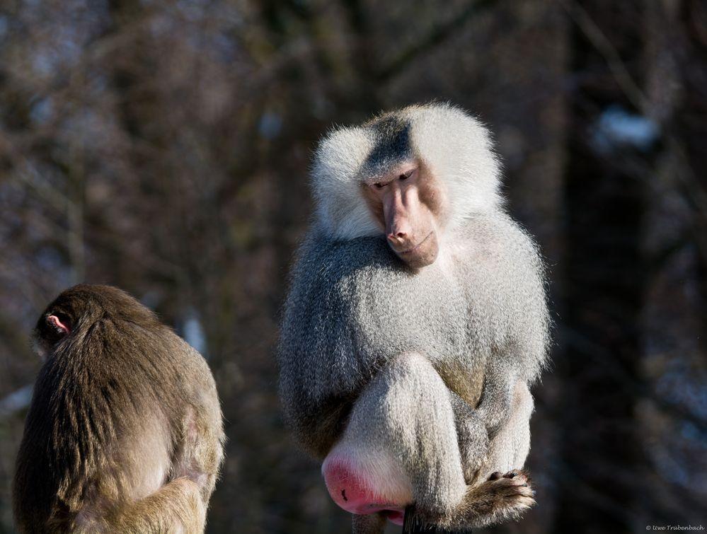 Wollen Wir Uns Nicht Wieder Vertragen Foto Bild Tiere Zoo