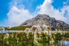 Wollgras am Grünsee