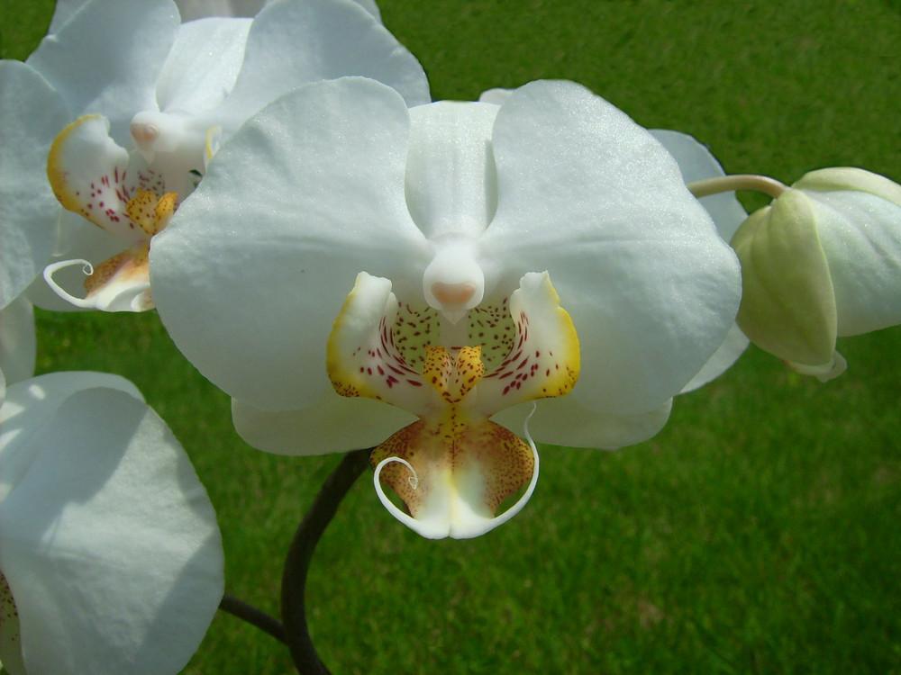 Wolltet du uns was sagen, Orchidee ?