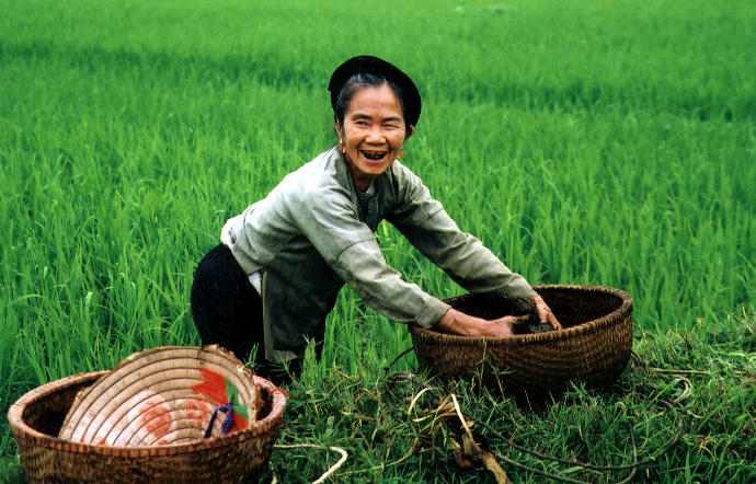 Woman on ricefield