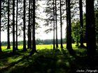 wonderful black.forest :]
