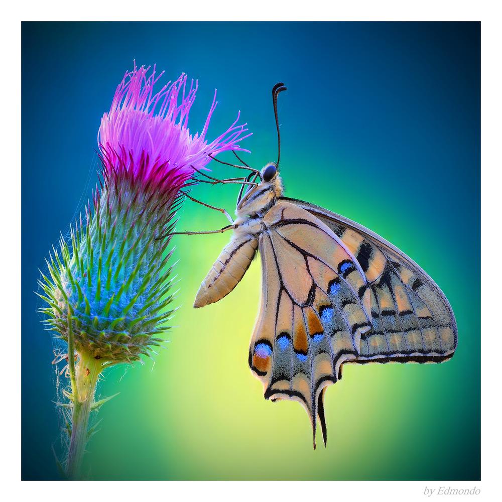 Wonderful creature..