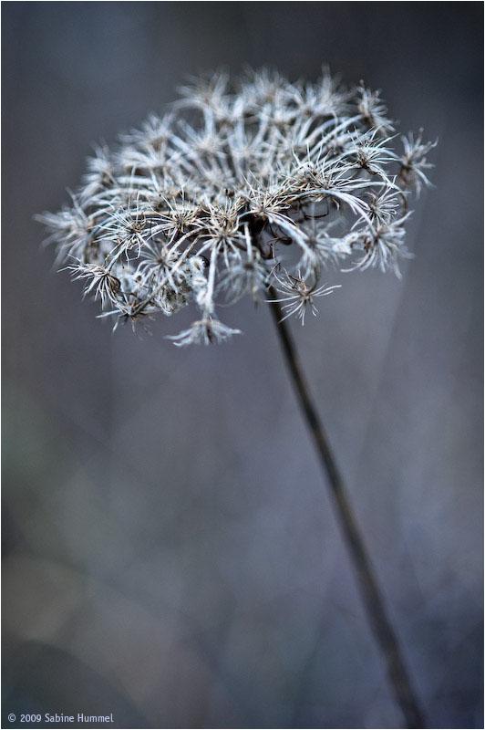 wonderful form of autumn