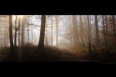 Wood Barrow