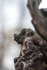 wood-dog