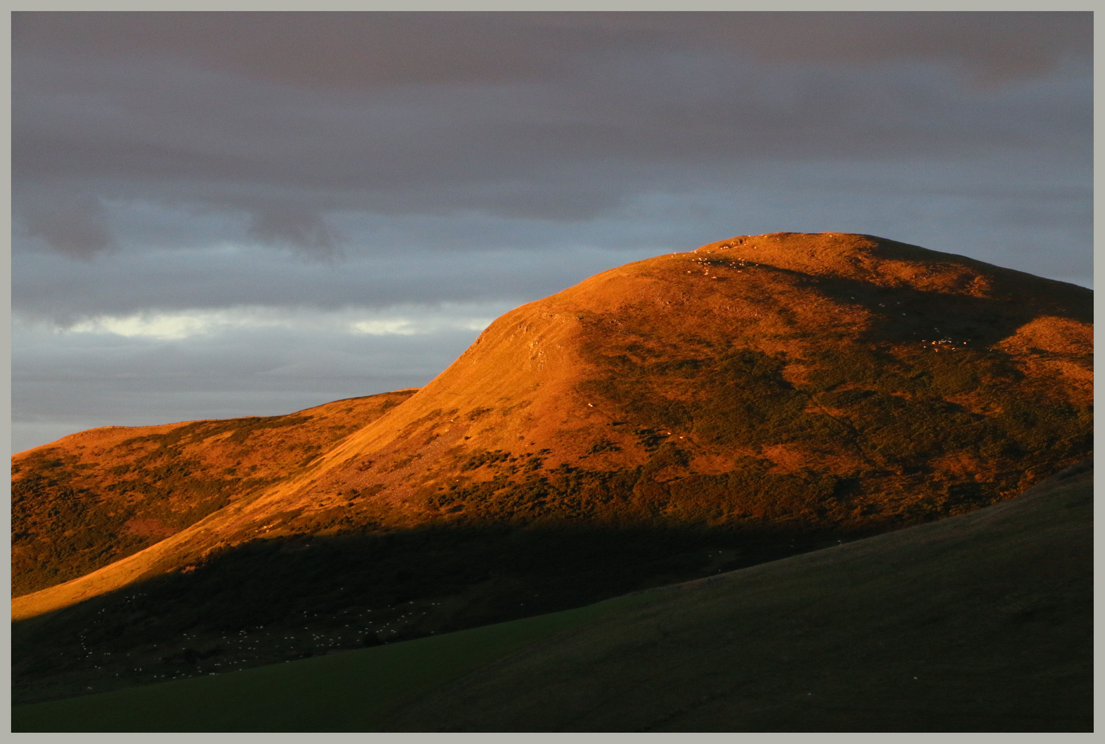 wood hill evening in the cheviot hills