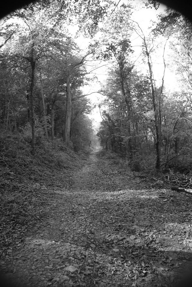 wood lane