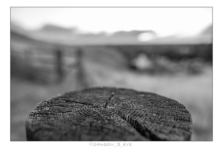 Wood Web One 2