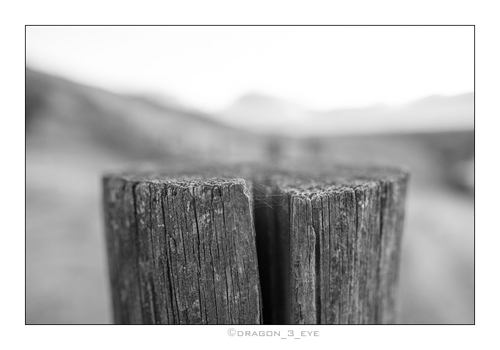 Wood Web One