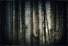 wood|en it be good...
