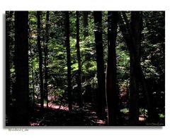 Woodland Calm...
