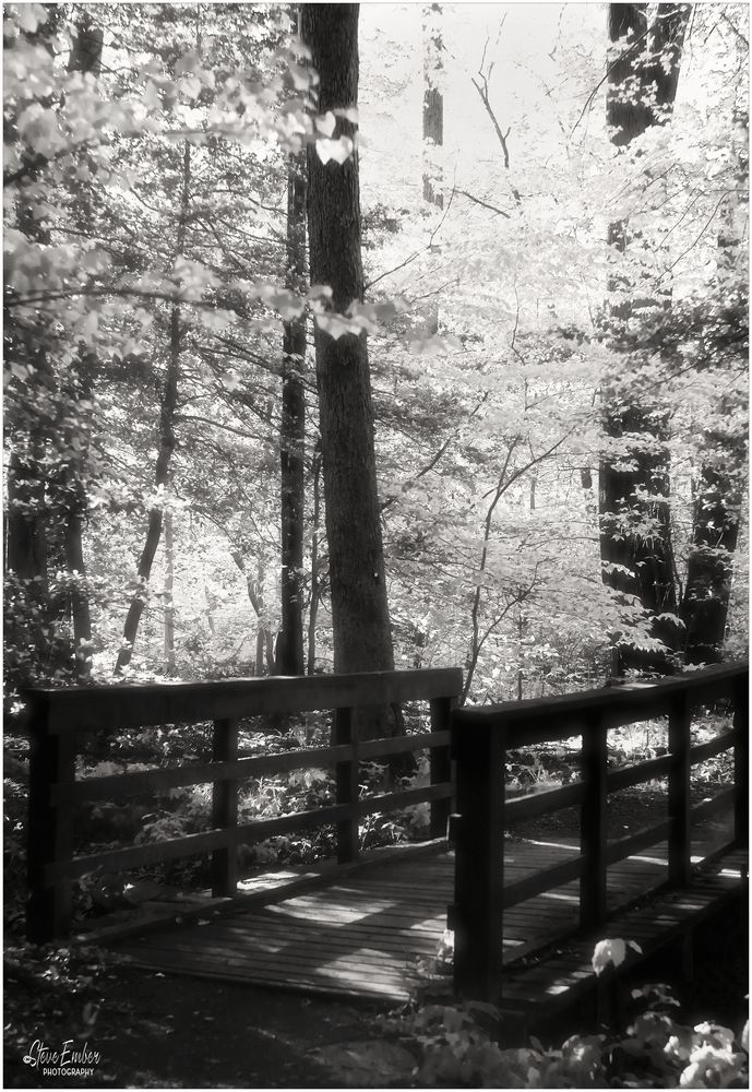 Woodland Calm No. 28 - A Bridge in the Forest