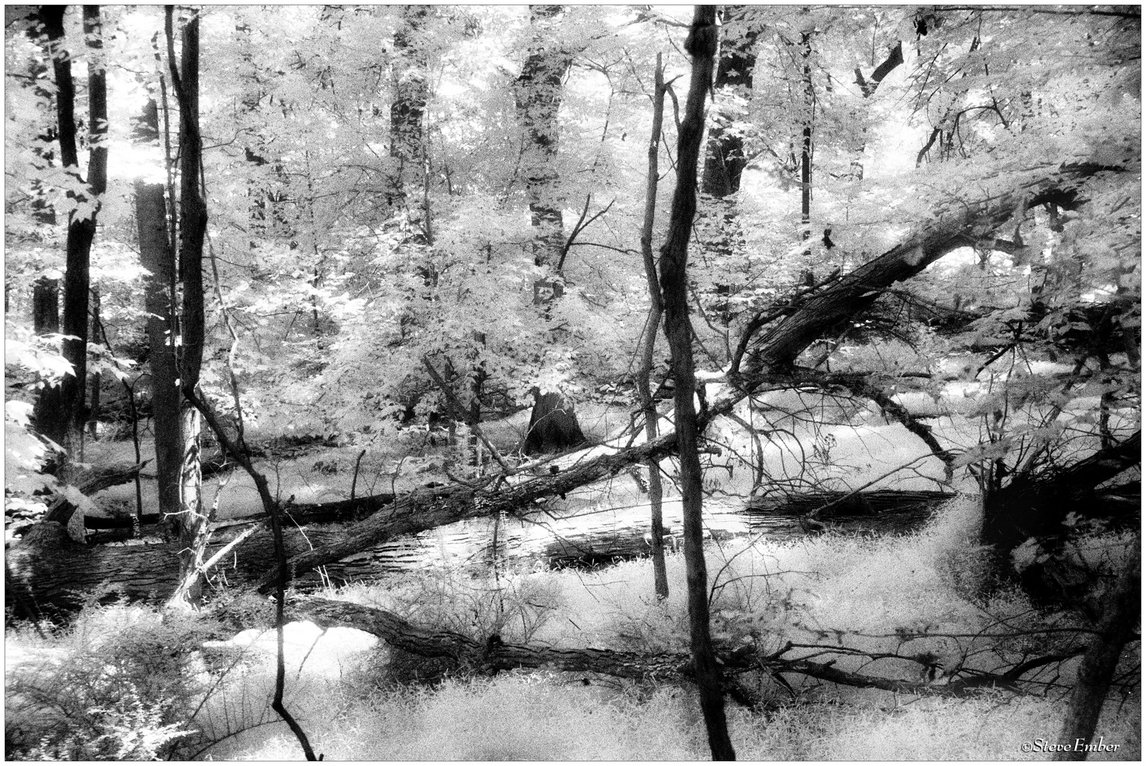 Woodland Calm - No. 7 (Infrared)