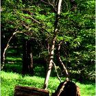 Woodland Calm - No.16