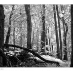 Woodland Calm - No.2 (Infrared)