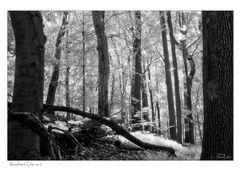 Woodland Calm - No.2 (Infrared)