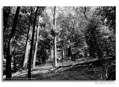 Woodland Calm - No.3