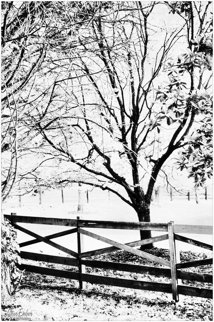 Woodland Calm No.30 - A Meadowlark Impression