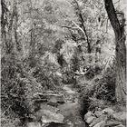 Woodland Calm No.31 -  Piney Run in Spring