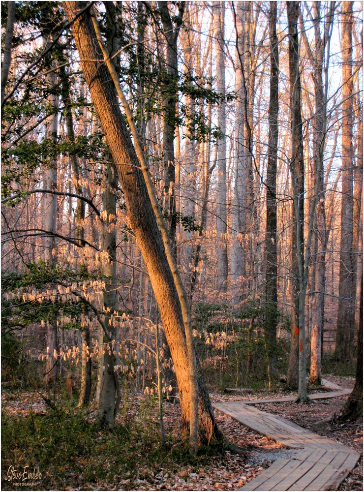 Woodland Calm No.36 - Woods Below Hidden Pond