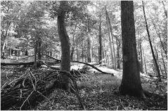 Woodland Calm No.4 - Patapsco State Park Summer Afternoon