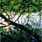 Woodland Calm No.8 - Nachmittags in Frühling