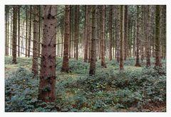 _woodland