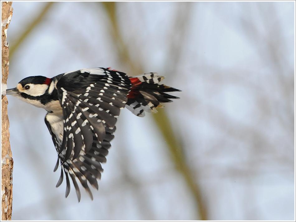 """Woodpecker-Darts"""