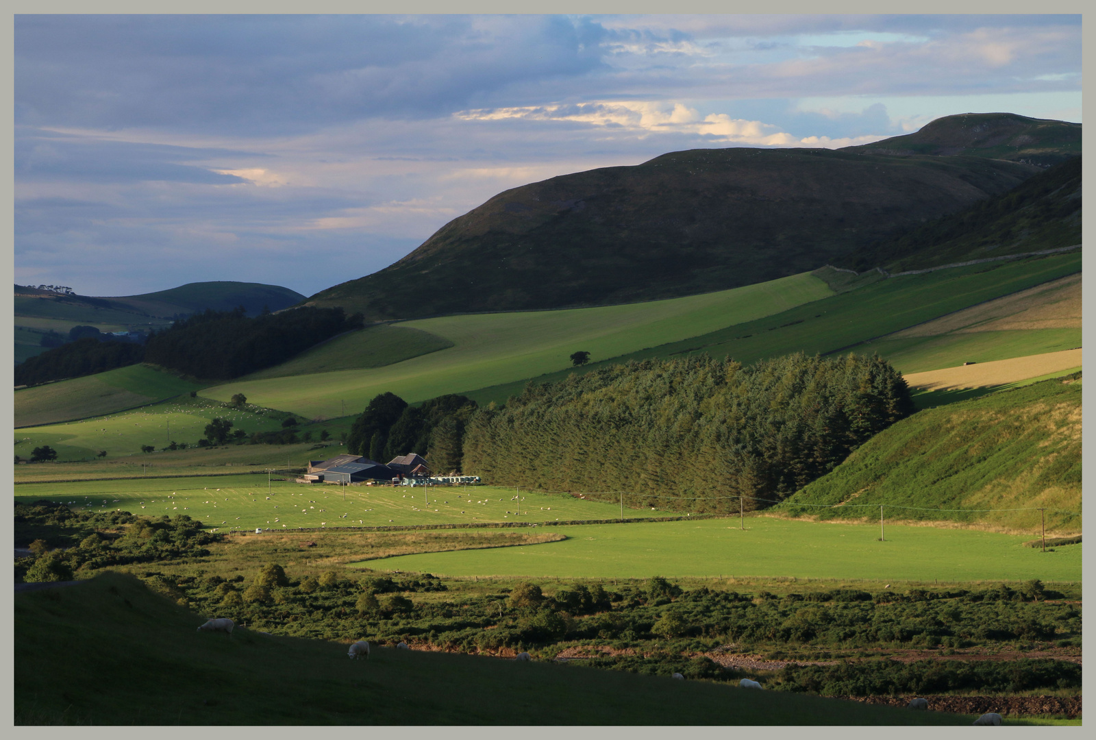 Woodside farm in the cheviot Hills evening 4