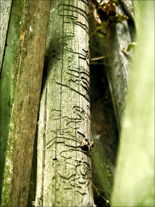woodworms