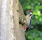 Woody Woodpecker II