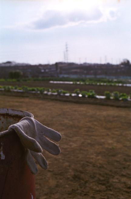 work-gloves 100