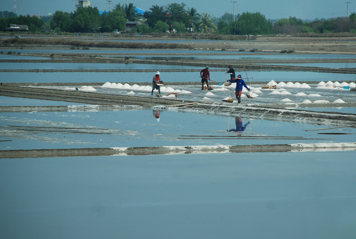Working at the salt field