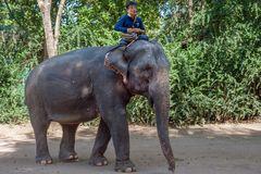Working elephant Lug Gop
