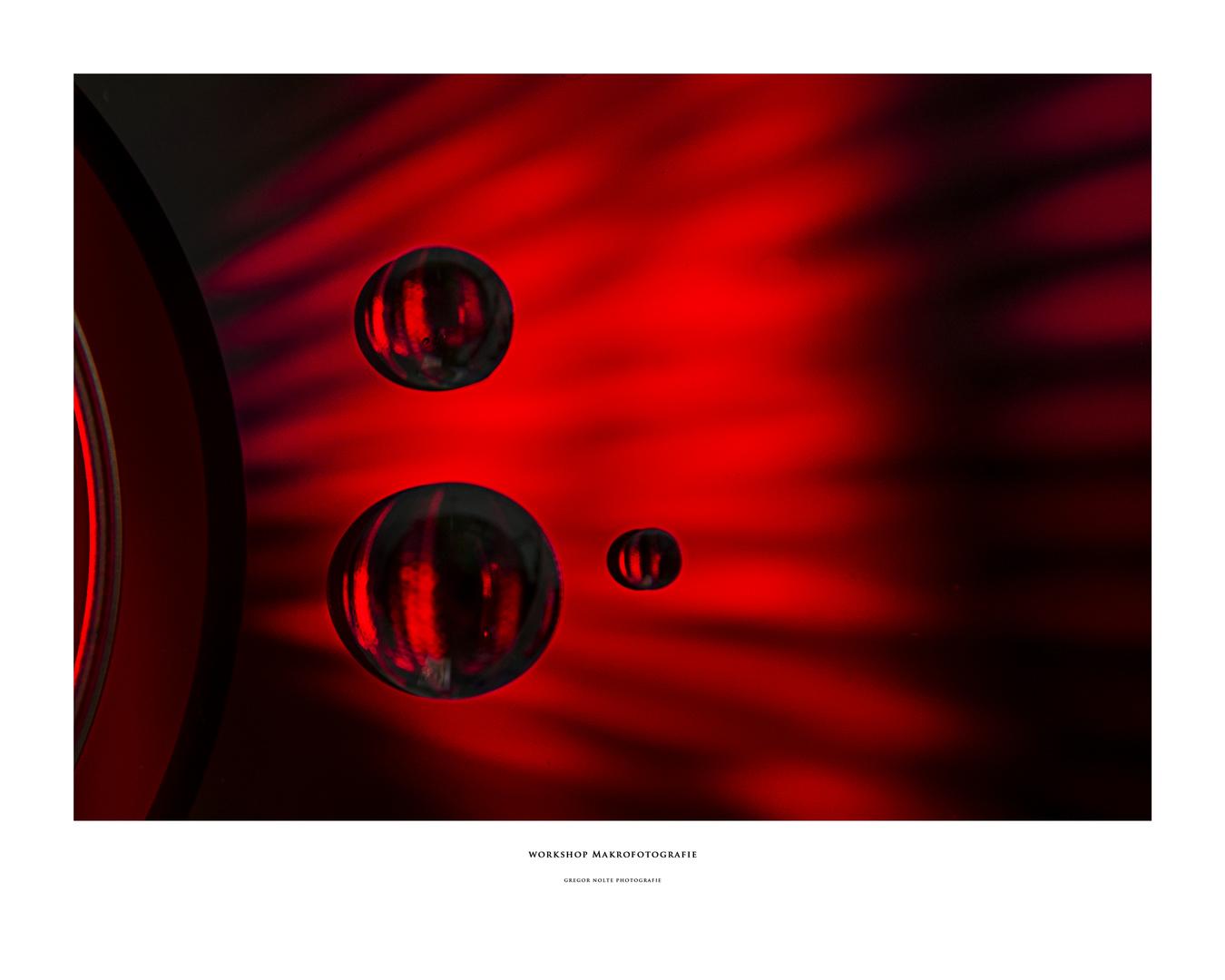 Workshop Makrofotografie Aufbau CD 1