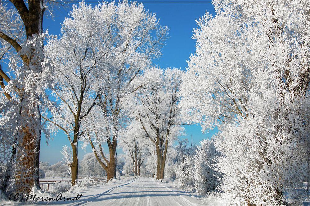 Worpswede - Hammeweg im Winterschmuck