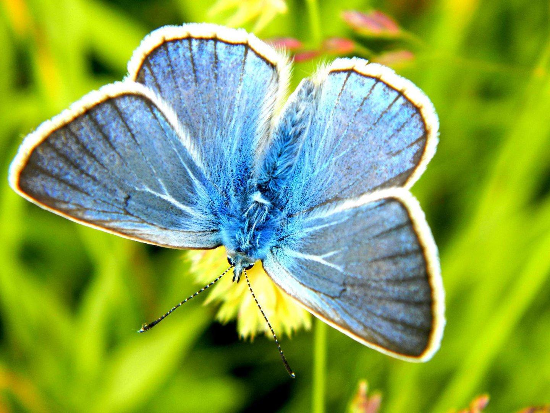 wow so blau