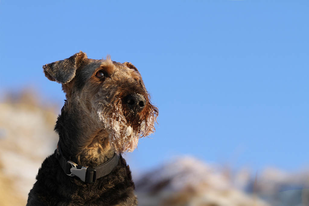 Wozu haben Hunde Bärte?